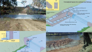 Fishway Design and Example Montage (©NSW Department of Primary Industris, ABC News)